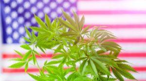 Is CBD Legal States