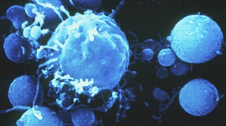 Apoptosis and Cancer