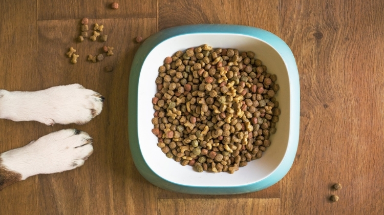 best cbd dog treats-1