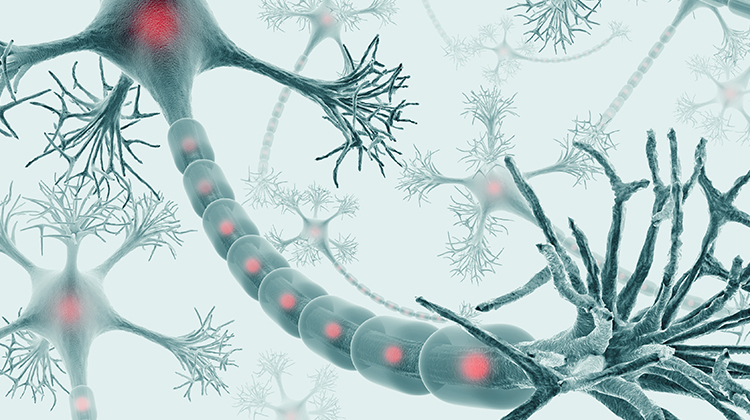 what is the somatic nervous system